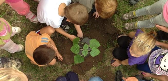 A ceglédi kisdiákok smaragdfa-ültetést szerveztek az öko-iskola udvarában